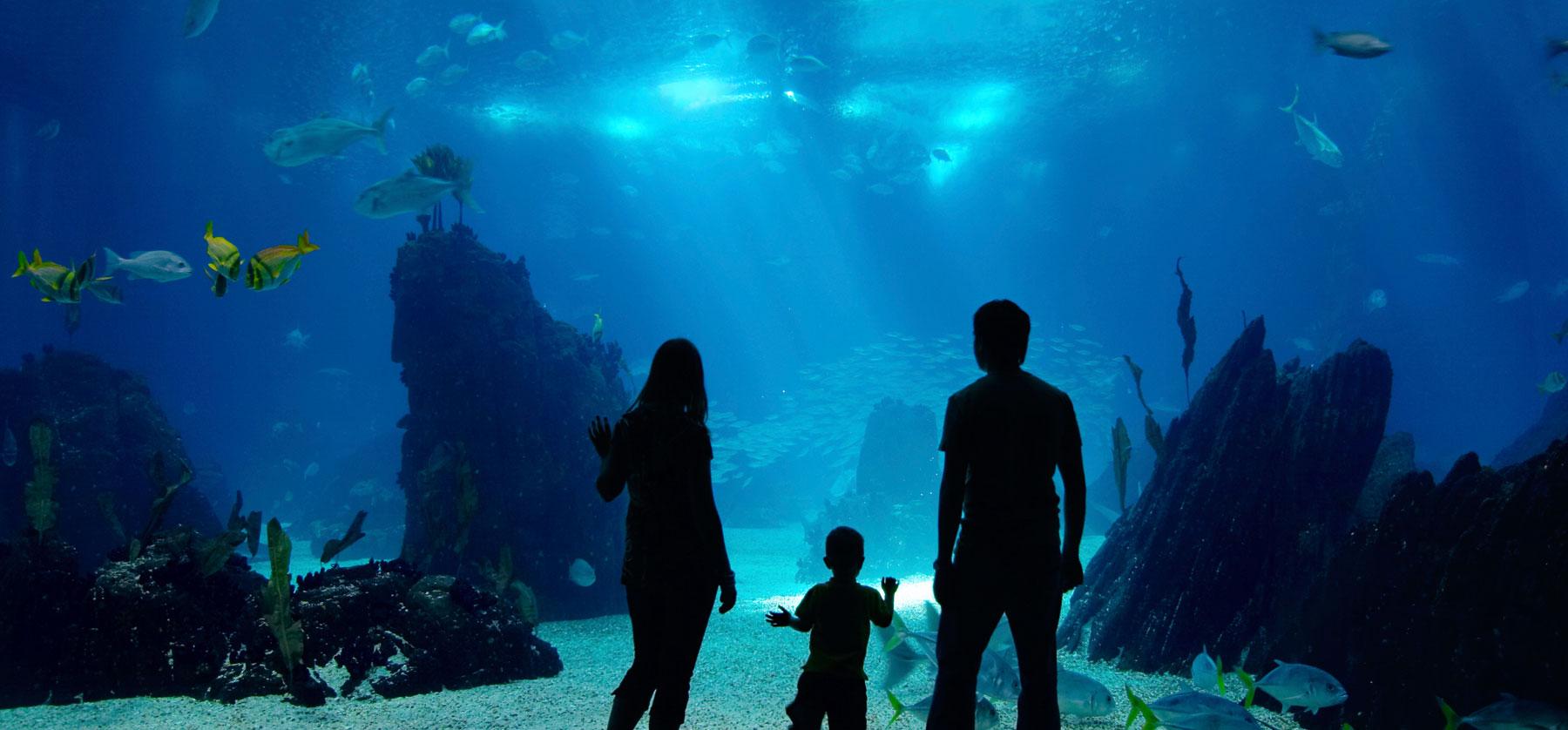 Fort Fisher Aquarium Deal Holiday Inn Wilmington Market