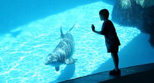 Aquarium Package at North Carolina Hotel