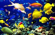 Wilmington Hotel Aquarium Package